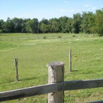 pasture and fence