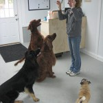 four dogs and day care staff
