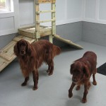 2 dogs in day care play room